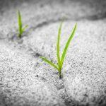 Grass wachsend