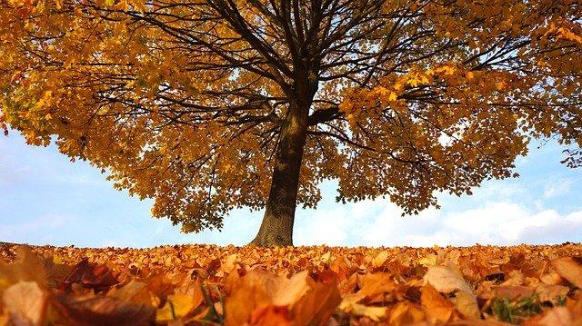 Statt November Rain gibt es Novemberhilfe